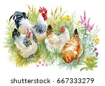 chicken and rooster in the... | Shutterstock . vector #667333279