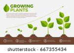 different steps of growing... | Shutterstock .eps vector #667355434