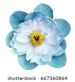 Stock photo peony flower turquoise on a white isolated background with clipping path nature closeup no 667360864