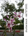 White Purple Orchids In My...