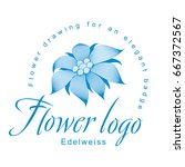 edelweiss is a logo template  a ... | Shutterstock .eps vector #667372567