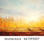wheat field with wood planks.... | Shutterstock . vector #667395007