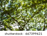 bokeh tree with blurred images | Shutterstock . vector #667399621