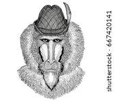monkey  baboon  dog ape  ape... | Shutterstock . vector #667420141