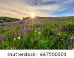 sunset on a hill covered with... | Shutterstock . vector #667500301