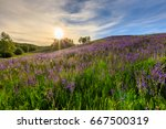 sunset on a hill covered with... | Shutterstock . vector #667500319