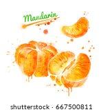 watercolor illustration of... | Shutterstock . vector #667500811