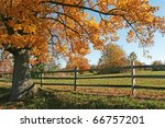 Autumn Tree And Wooden Fence...