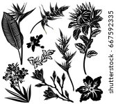 exotic flowers silhouettes ... | Shutterstock .eps vector #667592335