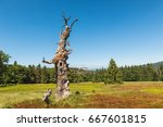 An Ancient Tree On The Former...