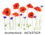 red poppies and wild flowers in ... | Shutterstock . vector #667637629