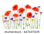 red poppies and wild flowers in ... | Shutterstock . vector #667637635
