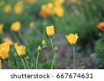 flowers | Shutterstock . vector #667674631