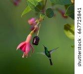 Hummingbird  Green Small Bird...