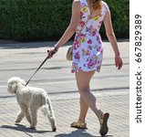 walking the dog on the street | Shutterstock . vector #667829389