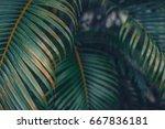Palm Leaves Wallpaper. Close U...