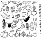 set of hand drawn vegetables... | Shutterstock .eps vector #667838587