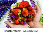 wild strawberry with flowers | Shutterstock . vector #667839361