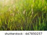 background of green juicy grass ...   Shutterstock . vector #667850257