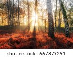 beautiful sunburst morning... | Shutterstock . vector #667879291