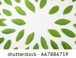 pattern made of young green... | Shutterstock . vector #667886719