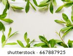 frame with branches and green... | Shutterstock . vector #667887925