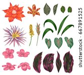 collection of tropical flowers  ...   Shutterstock .eps vector #667891525