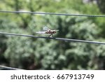 Dragonfly Sitting On Wires