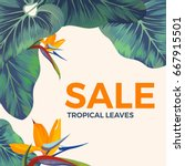 sale background with exotic... | Shutterstock .eps vector #667915501