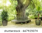 Bench Around The Oak In The Park