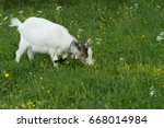 goat on green grass | Shutterstock . vector #668014984