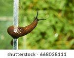 Escape Of Slug From Aquarium...