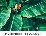 tropical banana foliage texture ... | Shutterstock . vector #668053939
