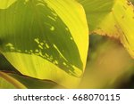 the shadow on green leaf | Shutterstock . vector #668070115