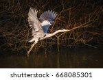 grey heron takes to the sky...