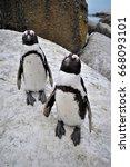 Jackass Penguin Friends.