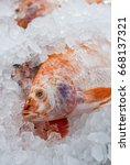 Small photo of fresh white Nile tilapia, Cichlidae fish cover with ice in market