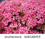 beautiful pink azalea ... | Shutterstock . vector #668168455