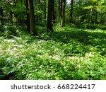 green grass  shrubs and trees... | Shutterstock . vector #668224417