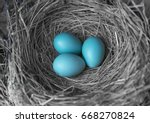 Picture Of A Robin\'s Nest With...
