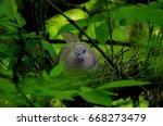 Dove In The Nest