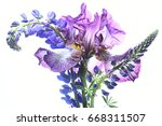 bouquet with irises on a white...   Shutterstock . vector #668311507