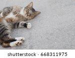 Cute Striped Tabby Cat Lying O...