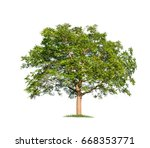 trees isolated on white... | Shutterstock . vector #668353771