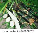 bamboo shoot | Shutterstock . vector #668360395