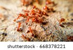 red imported fire ant action of ... | Shutterstock . vector #668378221