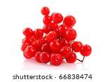Red Berries Of Viburnum...