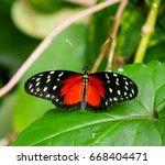 cattleheart butterfly  parides... | Shutterstock . vector #668404471