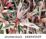 colorful leaf | Shutterstock . vector #668445439