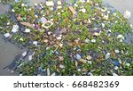 waste and water hyacinth in the ...   Shutterstock . vector #668482369